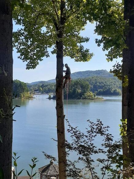 Photo of a Tree Fellers Employee climbing a tree by a lake in Hendersonville Tennessee